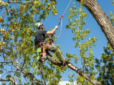 Personal Fall Protection Systems in General Industry (PFPS)